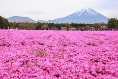 KAWAGUCHIKO, JAPAN-MAY 07,2017: Touristen genießen die Ansicht der schönen rosa Moosflammenblume oder der Shibakirschblüte-Felder stockbilder