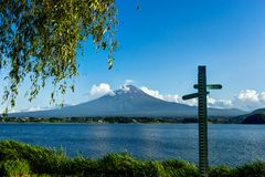 View to Mount Fuji with Flowers in Summer with blue sky and clou Royalty Free Stock Photography