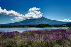 View to Mount Fuji lavender in Summer with blue sky and clouds w Stock Image