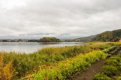 Kawaguchiko See mit Sonnenblume in Japan Stockfoto