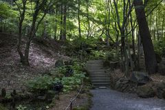 Kawaguchio -日本, 2017年6月14日:在久保田Itchik附近的庭院 库存图片