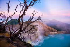 Kawah Ijen volcano with trees during beautiful sunrise in East Java, Indonesia royalty free stock images