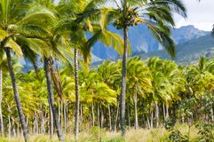 Kawaii Hawai Stati Uniti delle palme Fotografie Stock