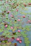 Kawaii Lotosowi kwiaty Obraz Stock