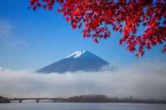Kawakuchiko湖的富士山 库存图片