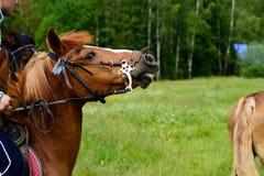 kawalerzysta na horseback fotografia royalty free