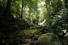 Kawang热带森林 库存图片
