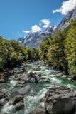 Kawarau rzeka i las, Nowa Zelandia Obrazy Royalty Free