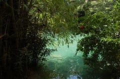 Kawasan flod i Cebu, Filippinerna Arkivbild