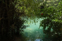 Kawasan rzeka w Cebu, Filipiny Fotografia Stock