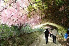 Kawashi富士庭院 免版税库存照片