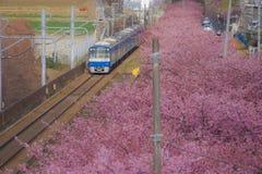 Kawazu cherry tree and Keikyu line Miurakaigan. Shooting location :  Yokohama-city kanagawa prefecture stock image