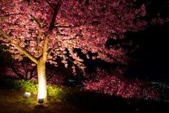 Kawazu-Kirschbaum nachts Lizenzfreie Stockfotografie