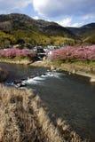 Kawazu-zakura i Japan, 2015 Royaltyfri Foto