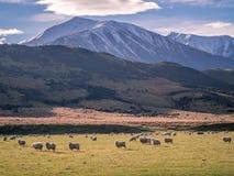 kawiarni lato krajobrazowy nowy Zealand Zdjęcie Royalty Free