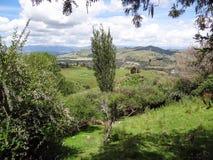 kawiarni lato krajobrazowy nowy Zealand Fotografia Stock