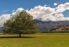 kawiarni lato krajobrazowy nowy Zealand Fotografia Royalty Free