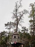 Kawiarnia znak na domek na drzewie Obrazy Royalty Free
