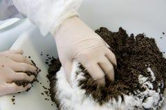 Kawioru zakład przetwórczy, pracownik miesza jesiotrów jajka z solankowym i Zdjęcia Stock