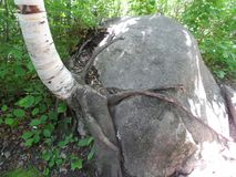 Kawishiwi Trail Rock Stock Image