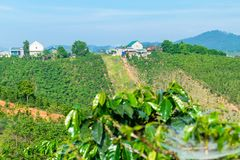 Kawowa plantacja na wzgórzu z domami pod światłem słonecznym w Dalat Wietnam zdjęcia stock