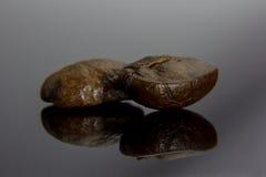 Kawowe fasole, brąz, stawiają dalej czarnego tło z odbiciem Obrazy Stock