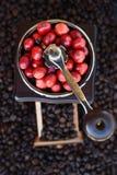 Kawowe fasole dojrzewa w kawowym ostrzarzu Obrazy Stock