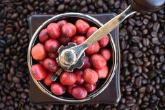 Kawowe fasole dojrzewa w kawowym ostrzarzu Fotografia Royalty Free