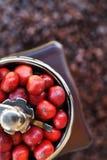 Kawowe fasole dojrzewa w kawowym ostrzarzu Fotografia Stock