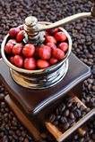 Kawowe fasole dojrzewa w kawowym ostrzarzu Obrazy Royalty Free