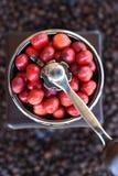 Kawowe fasole dojrzewa w kawowym ostrzarzu Obraz Stock
