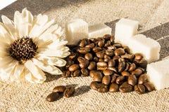Kawowe fasole i cukier Obrazy Royalty Free