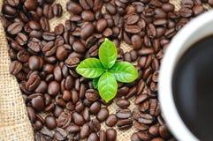 Kawowe fasole i liść Obraz Stock