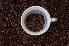 Kawowe fasole w filiżance, filiżanka kawy z fasolami Zdjęcie Stock