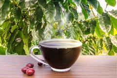 Kawowe fasole z ziarnami zdjęcia stock