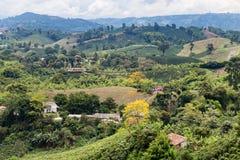 Kawowej plantaci widok obrazy royalty free