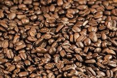 Kawowy bobowy tło Fotografia Stock