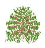 Kawowy drzewo Obrazy Royalty Free