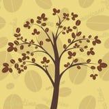Kawowy drzewo Fotografia Stock