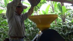 Kawowy rolnik, pracownik, plantacja, natura zbiory