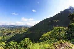 Kawowy trójbok w Kolumbia Fotografia Royalty Free