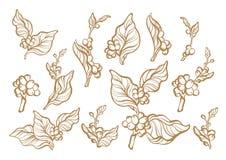 Kawowy ustawiający gałąź z liściem i kawową fasolą royalty ilustracja