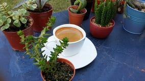 Kawy espresso kawa w białej filiżance wśród mini kaktusa zdjęcia royalty free