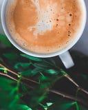 Kawy i Nature/Zielone rośliny Fotografia Royalty Free