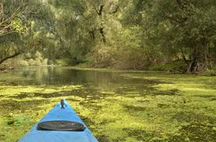 Kayak in Danube delta. Bow of a blue kayak flowing on water surface all green from algae. Willow trees slanted over water. Danube river delta. Romania royalty free stock photo