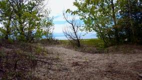 Kayak della gente nella distanza di bella riva della spiaggia con gli alberi verdi fertili durante il giorno di estate Sabbia Sho stock footage