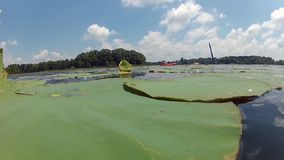 Kayak della gente sul lago con i travertini stock footage