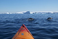 Kayak and diving penguins (Antarctica) Royalty Free Stock Photos