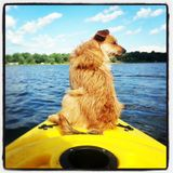Kayak dog Royalty Free Stock Photography