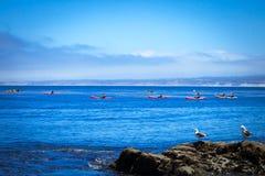 Kayak fahren in Monterey-Bucht Stockfotos